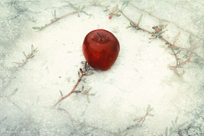 apple and snow aloha-mermaid deviant art